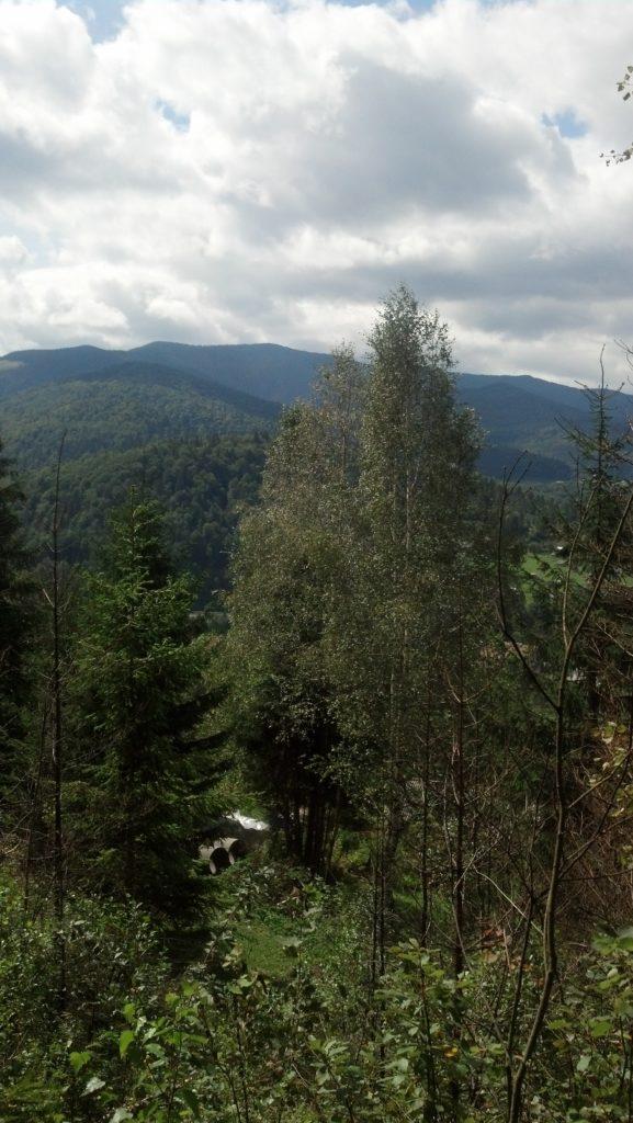 вид из леса в Карпатах